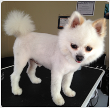 campbell dog grooming