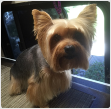 southbay_dog_grooming